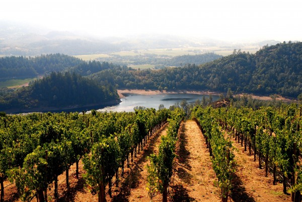 lush vineyard in California's Napa Valley area